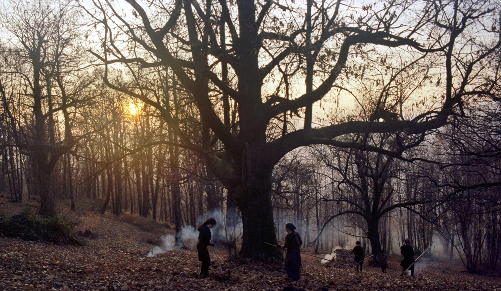 Opowieści z kasztanowego lasu
